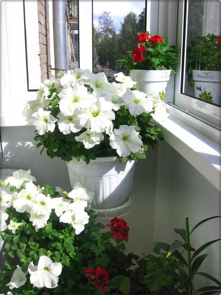 Благоустройство балкона. цветочные стойки - зелёный дневник.