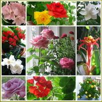 красиво цветущие