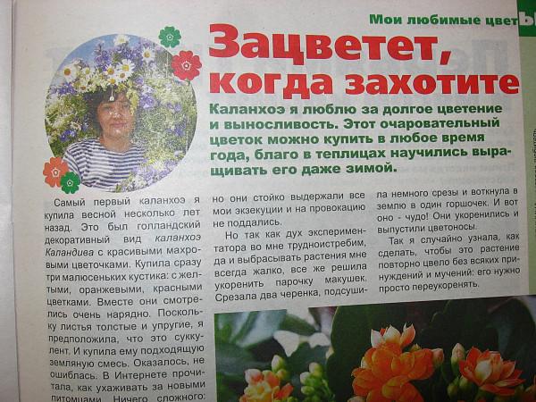 Моя статья о каланхоэ