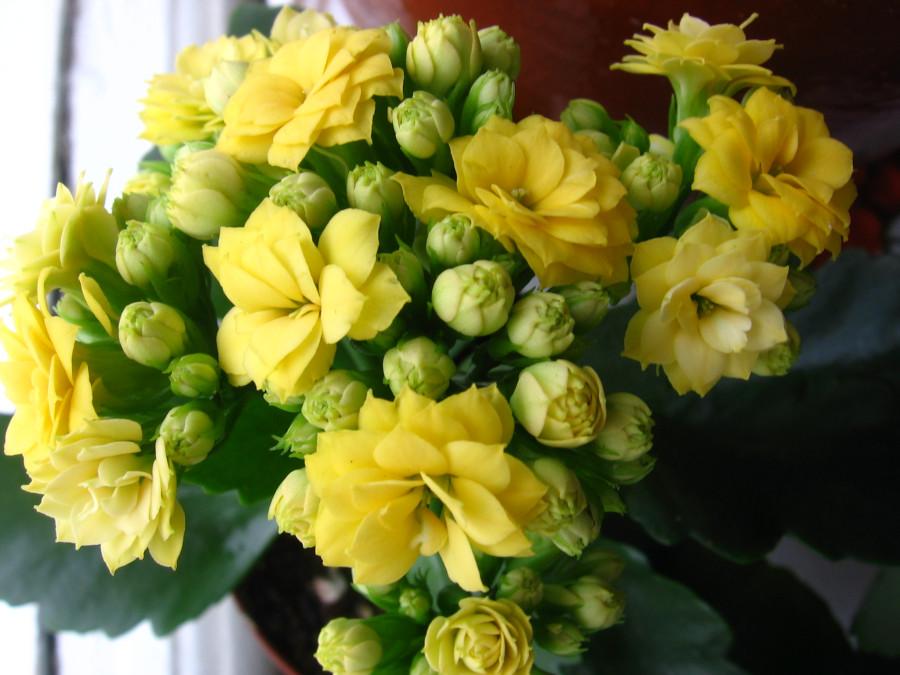 Кустик с желтыми цветами
