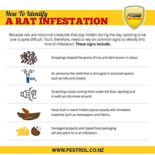 Image from https://www.pestrol.co.nz/blog/guide-to-rat-pests/