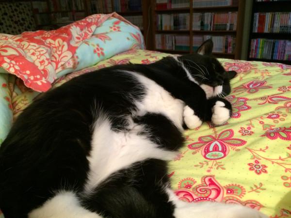 virtual kitty snuggle