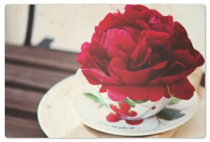 red-peony-in-a-cup