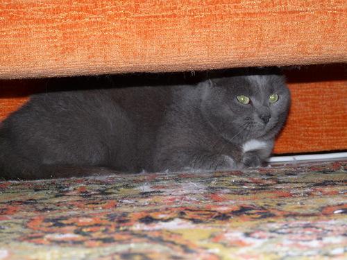 Кошка Рута