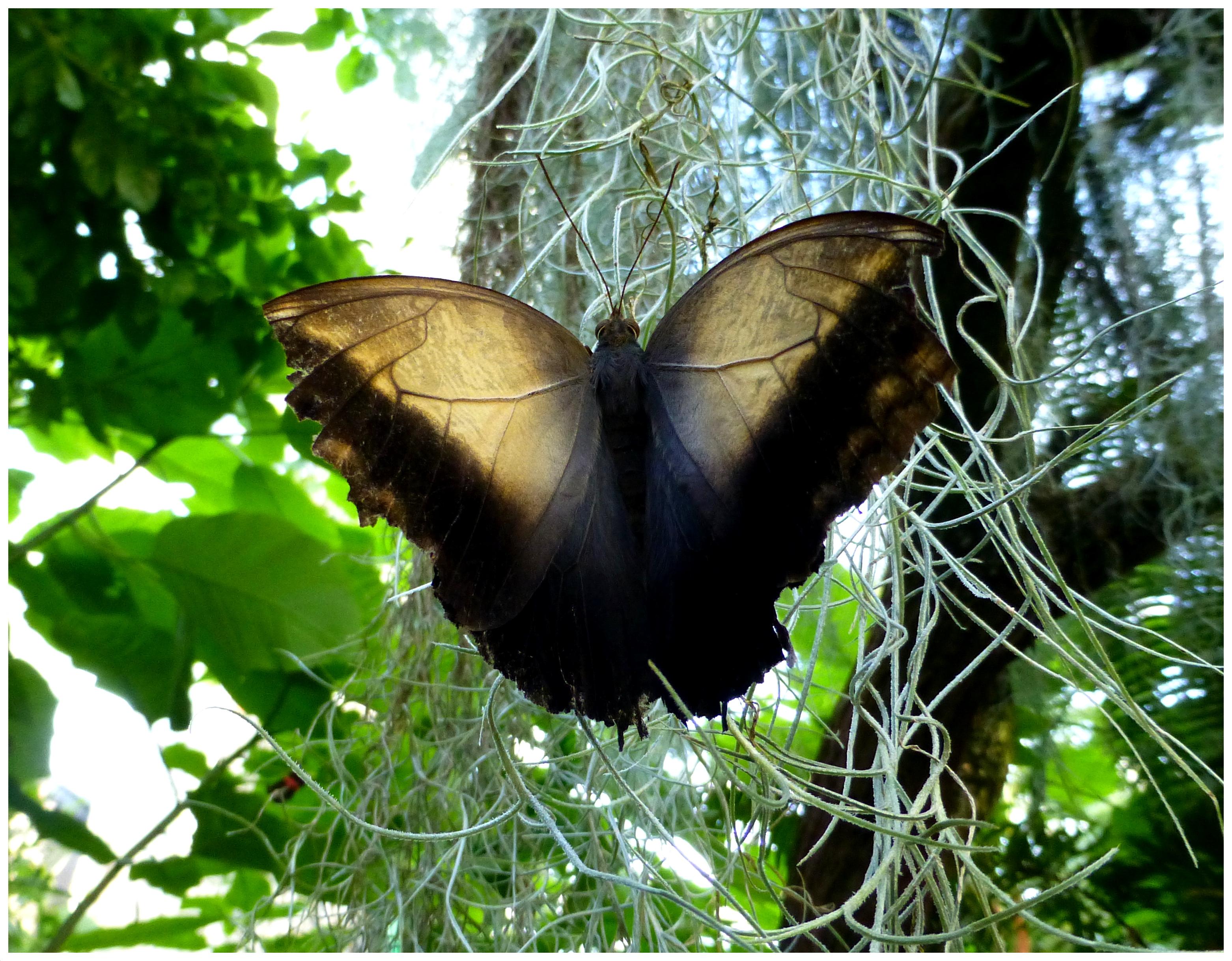 butterflies91