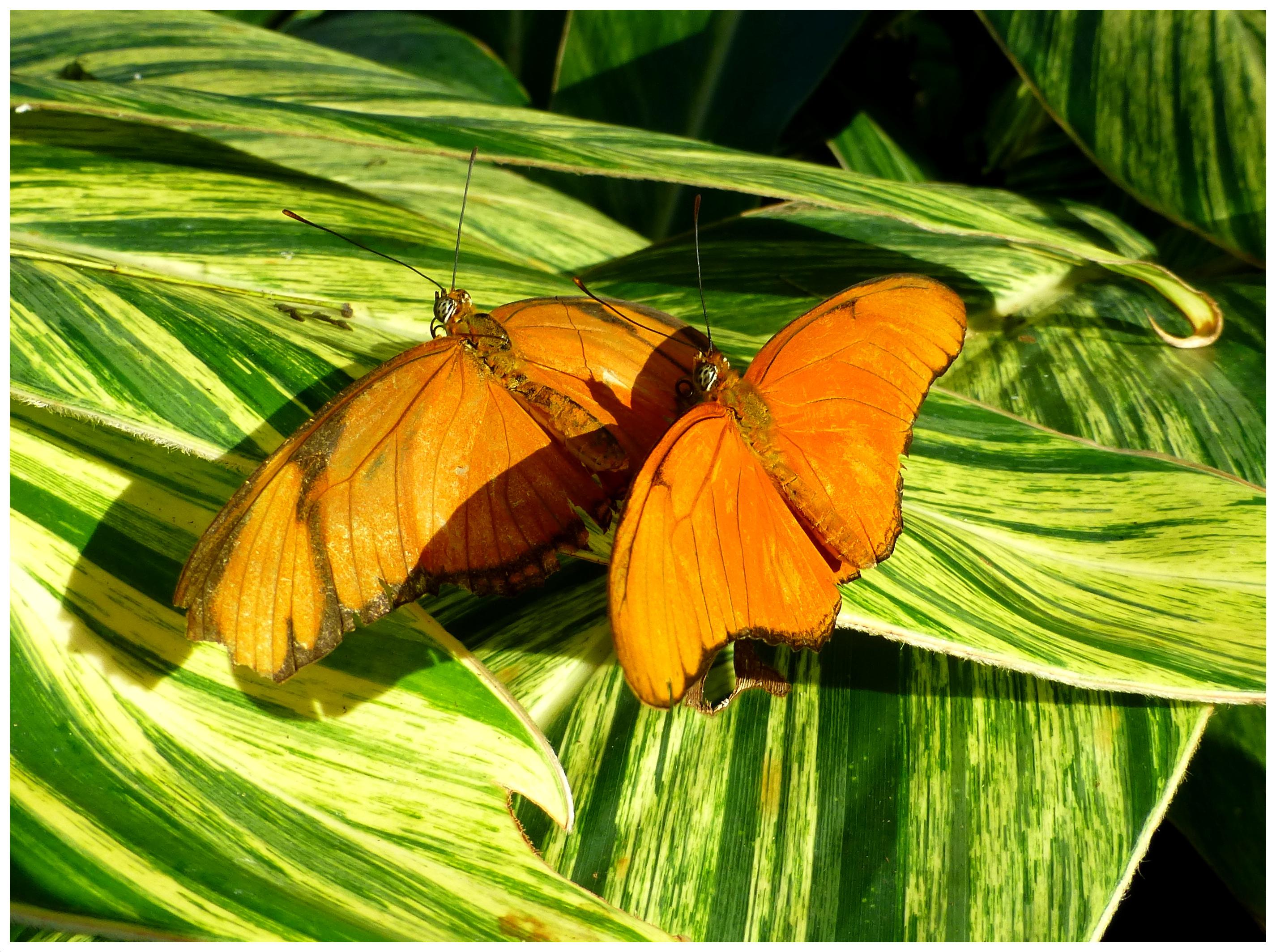 butterflies94