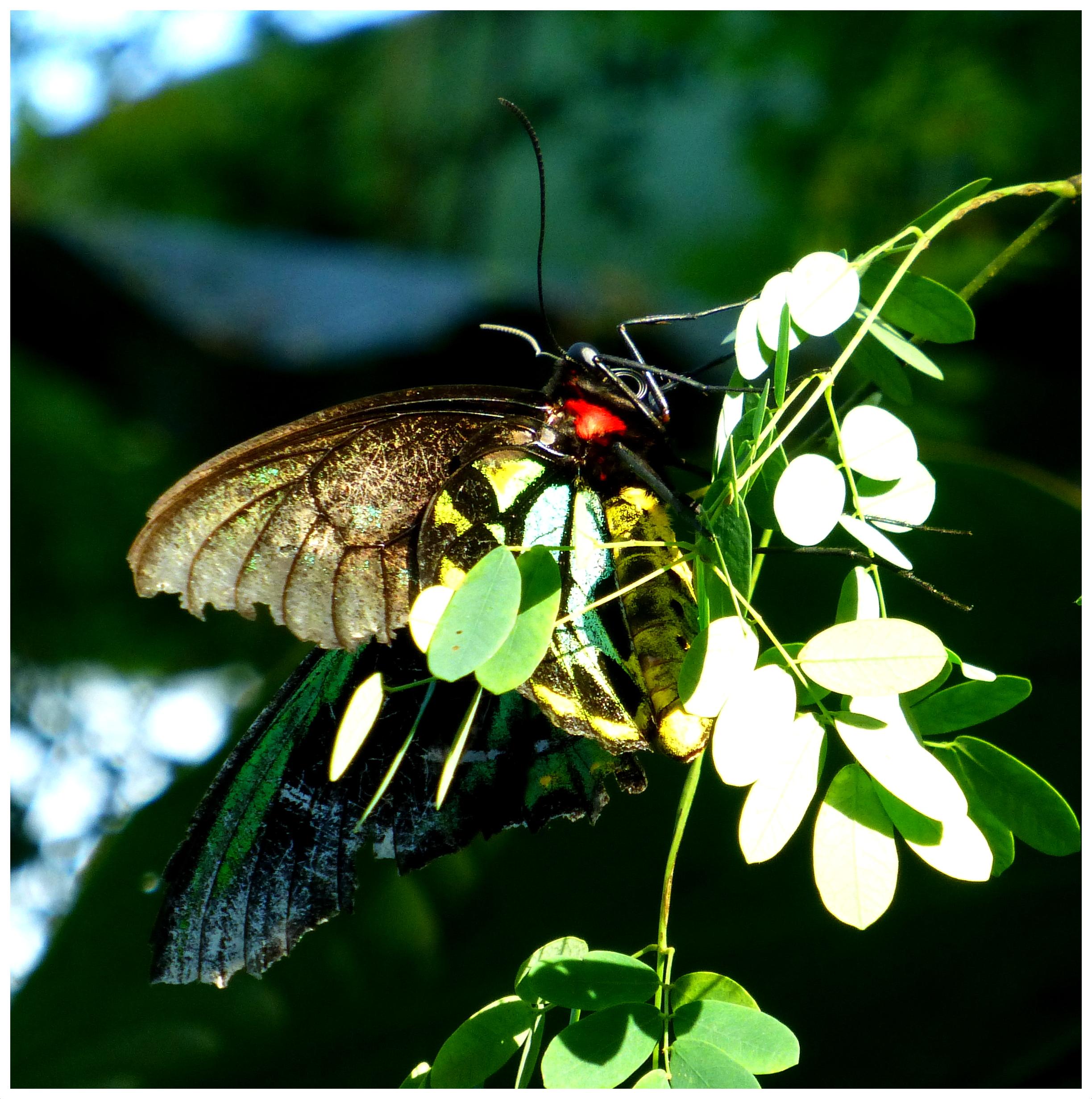 butterflies95