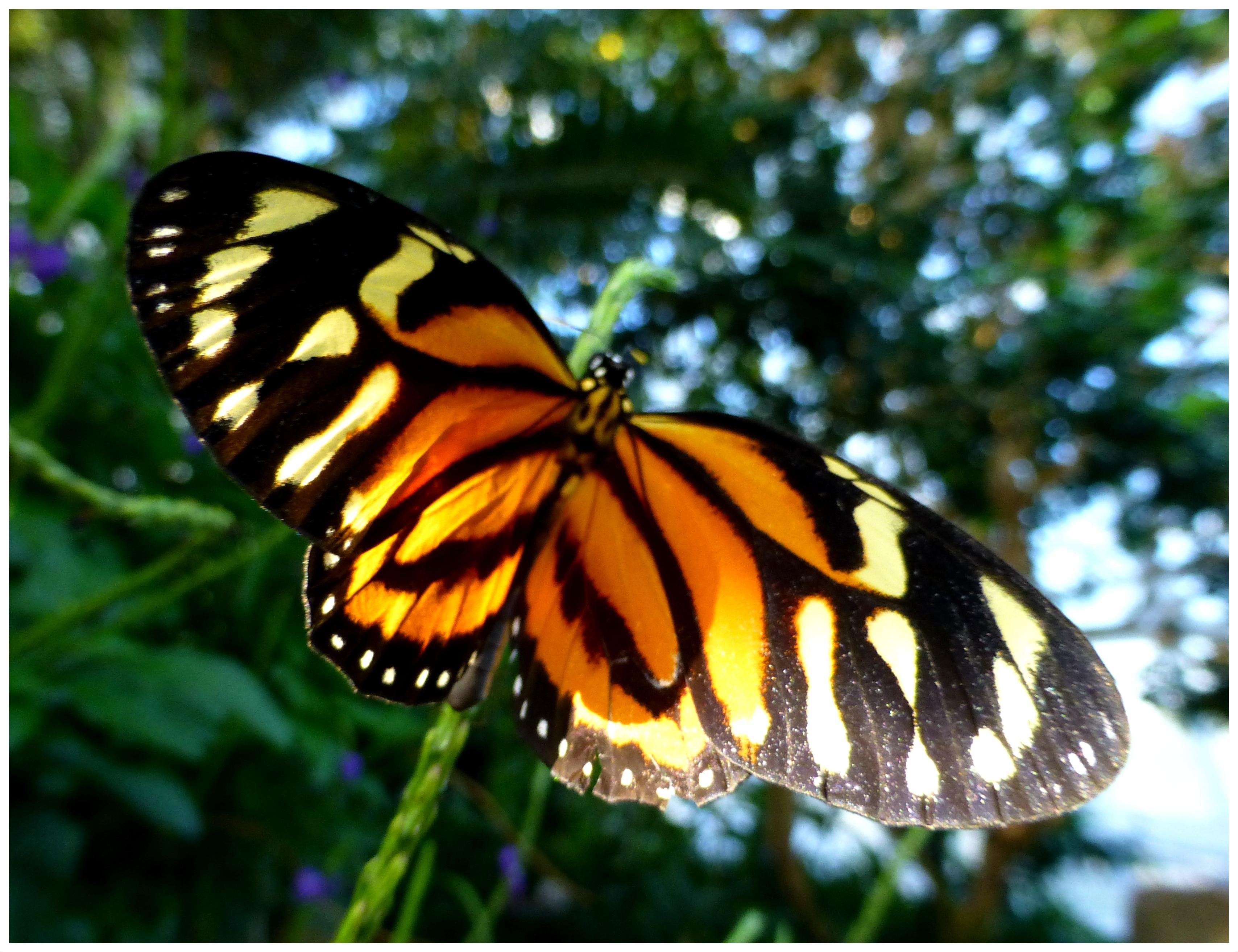 butterflies96