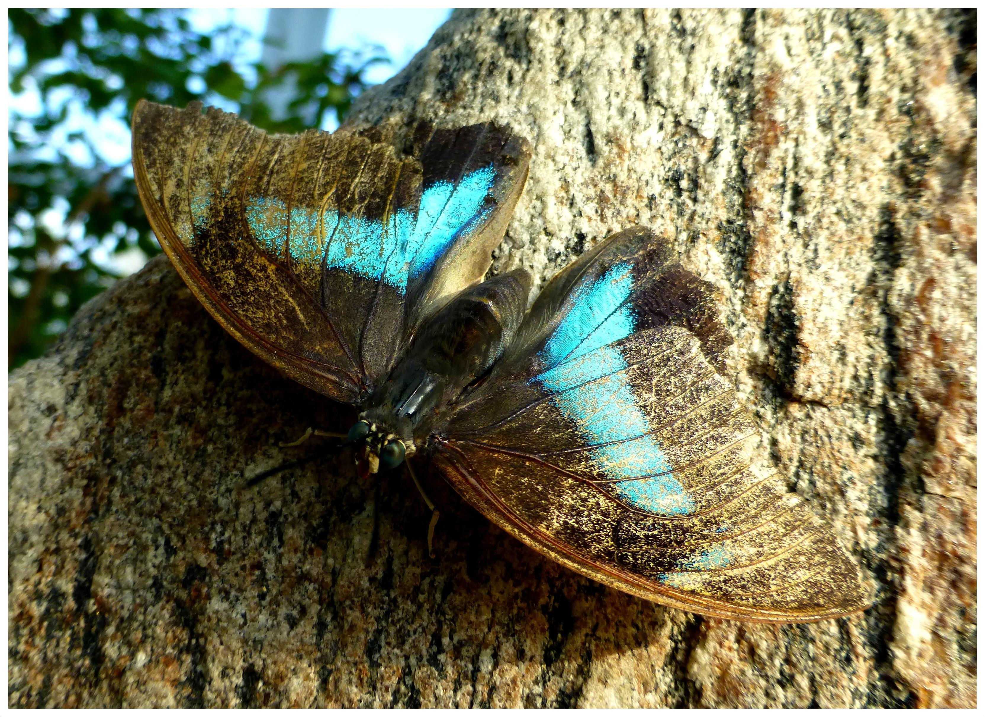 butterflies97