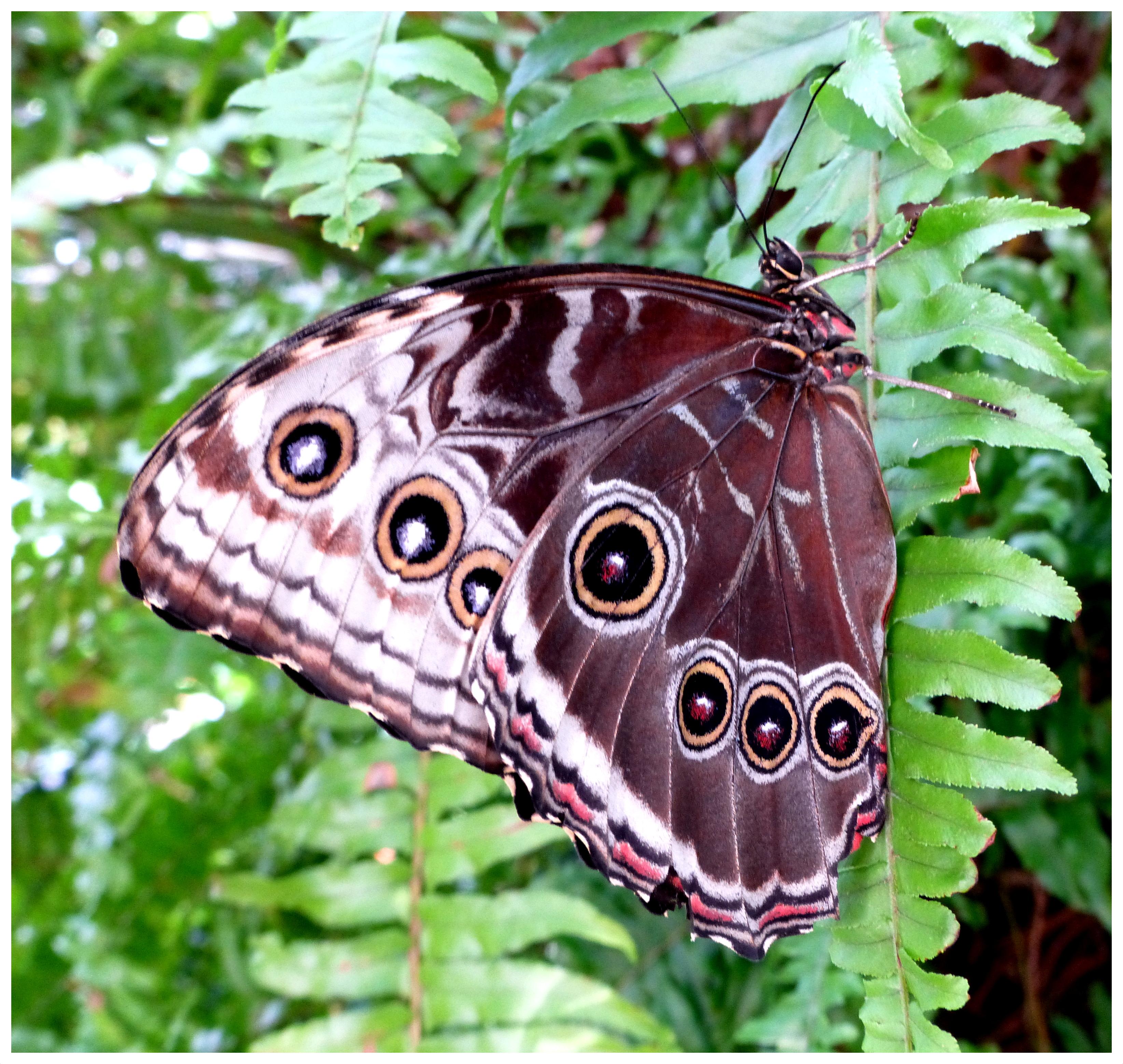 butterflies98