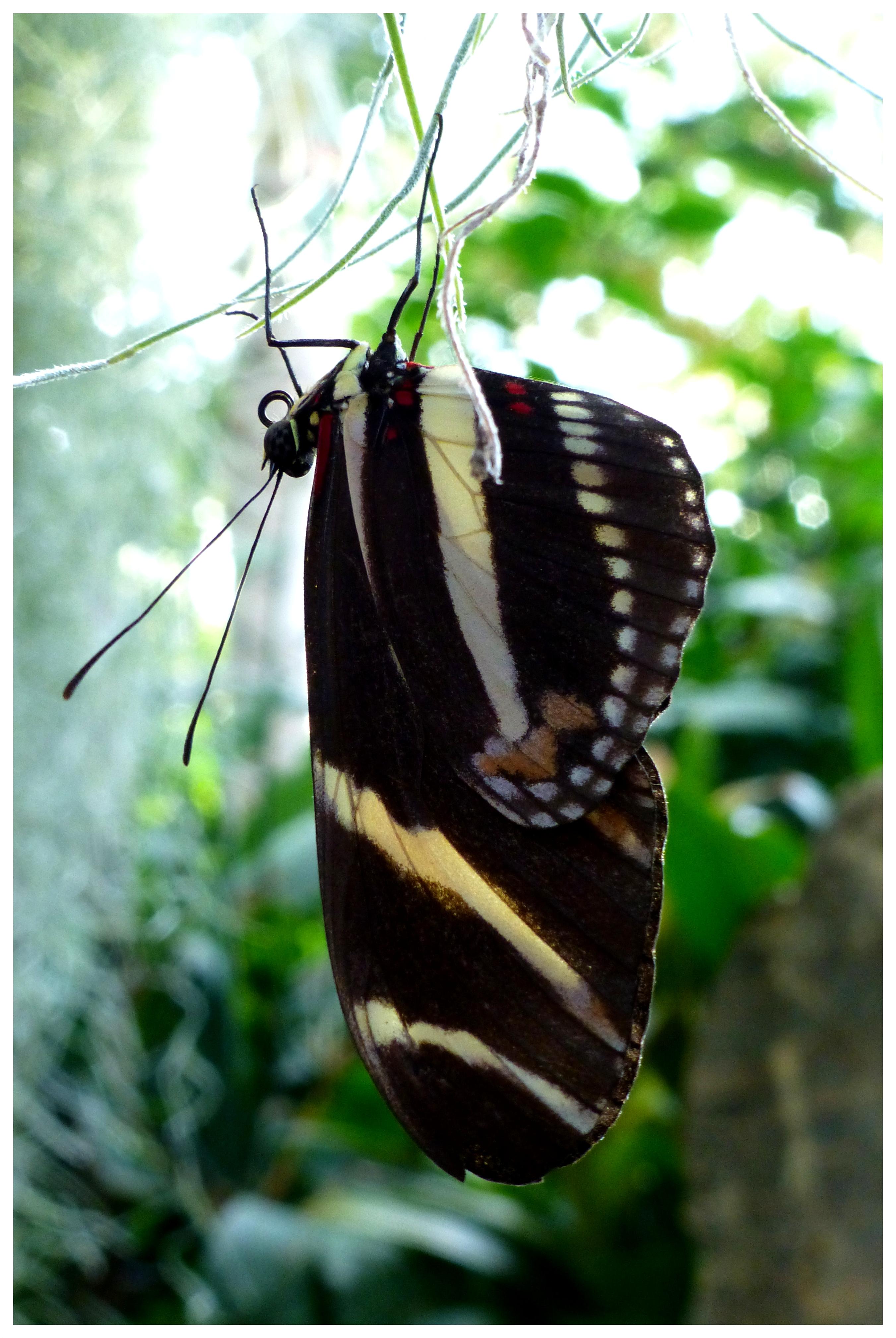 butterflies994