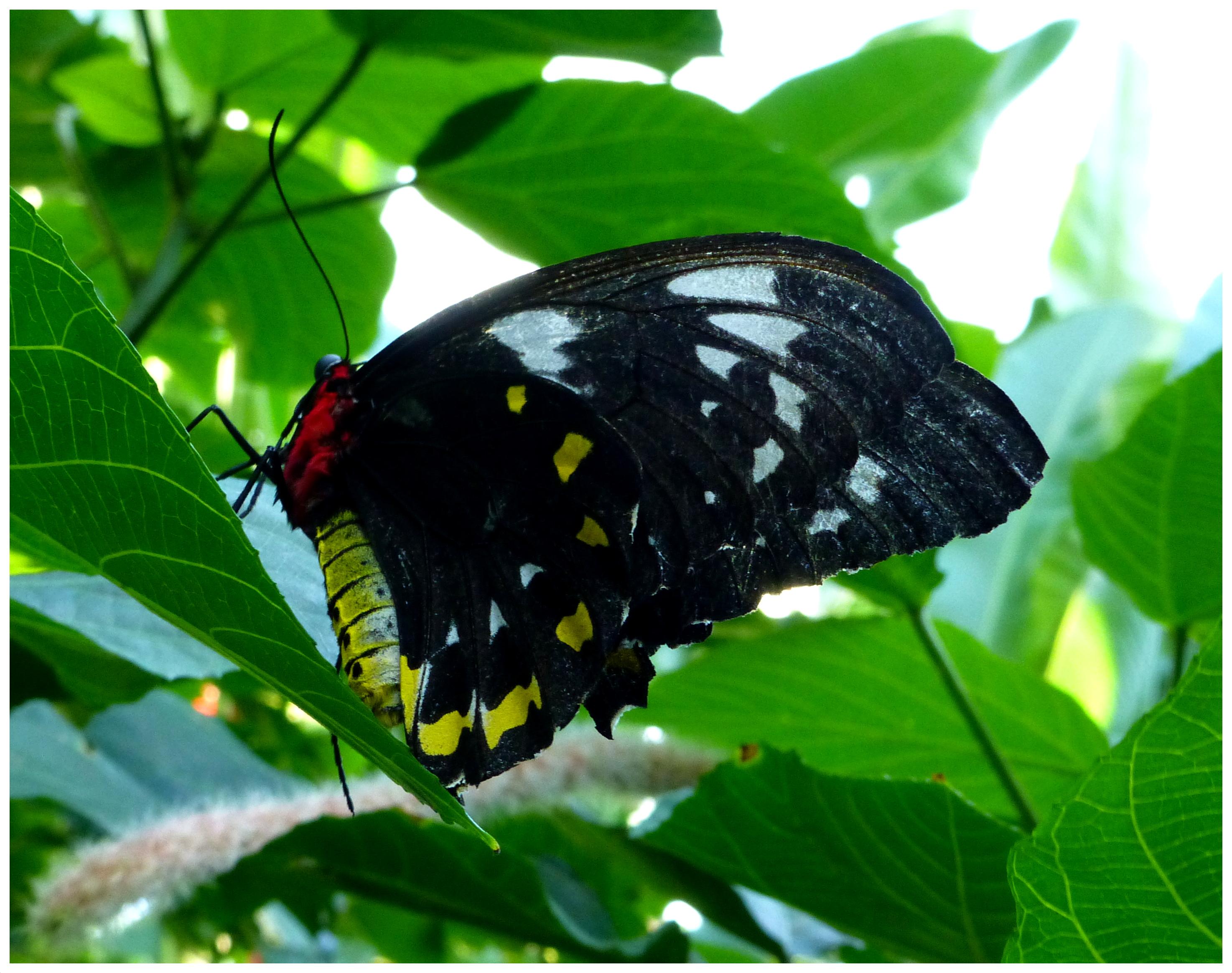 butterflies995