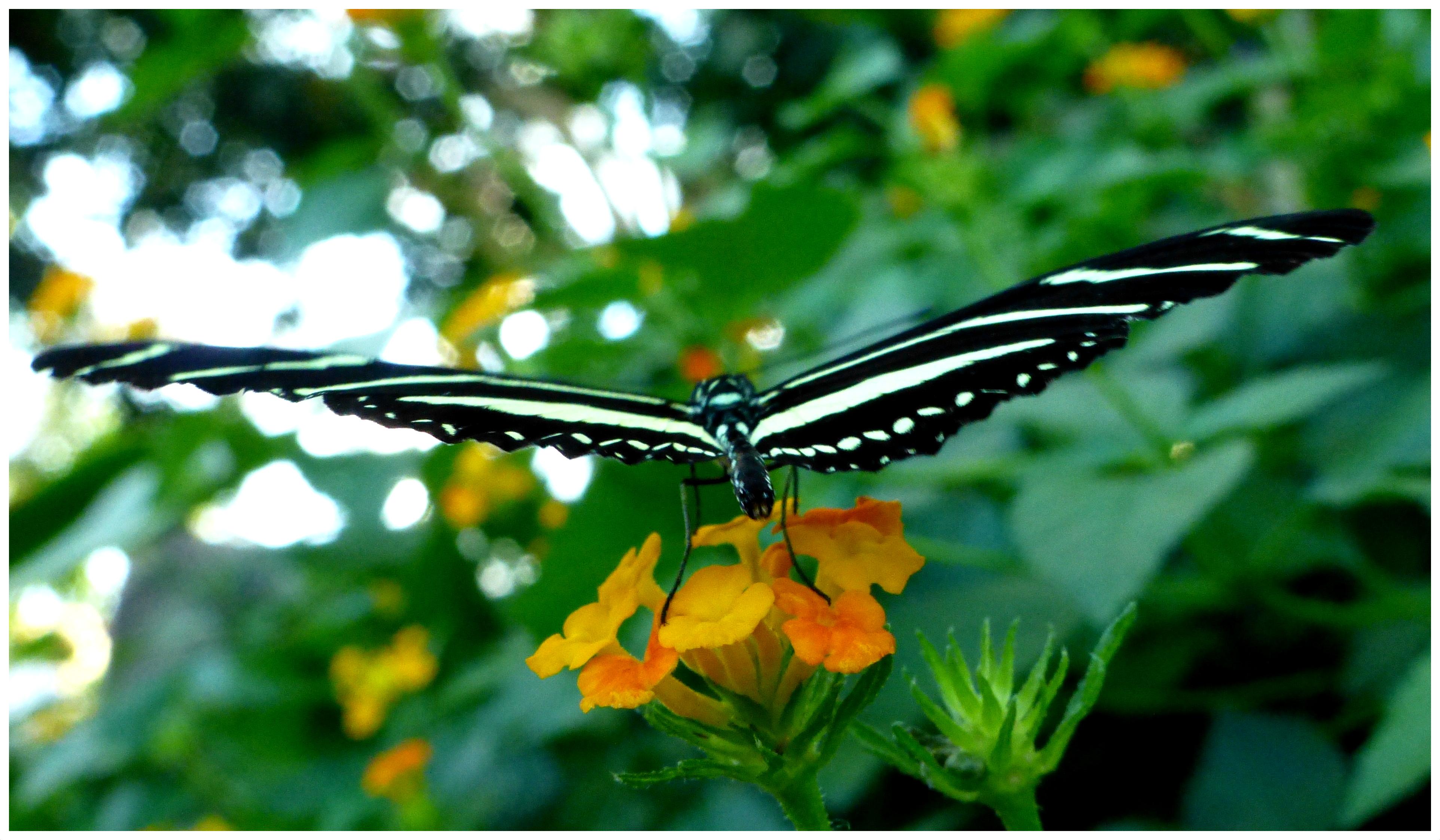 butterflies996