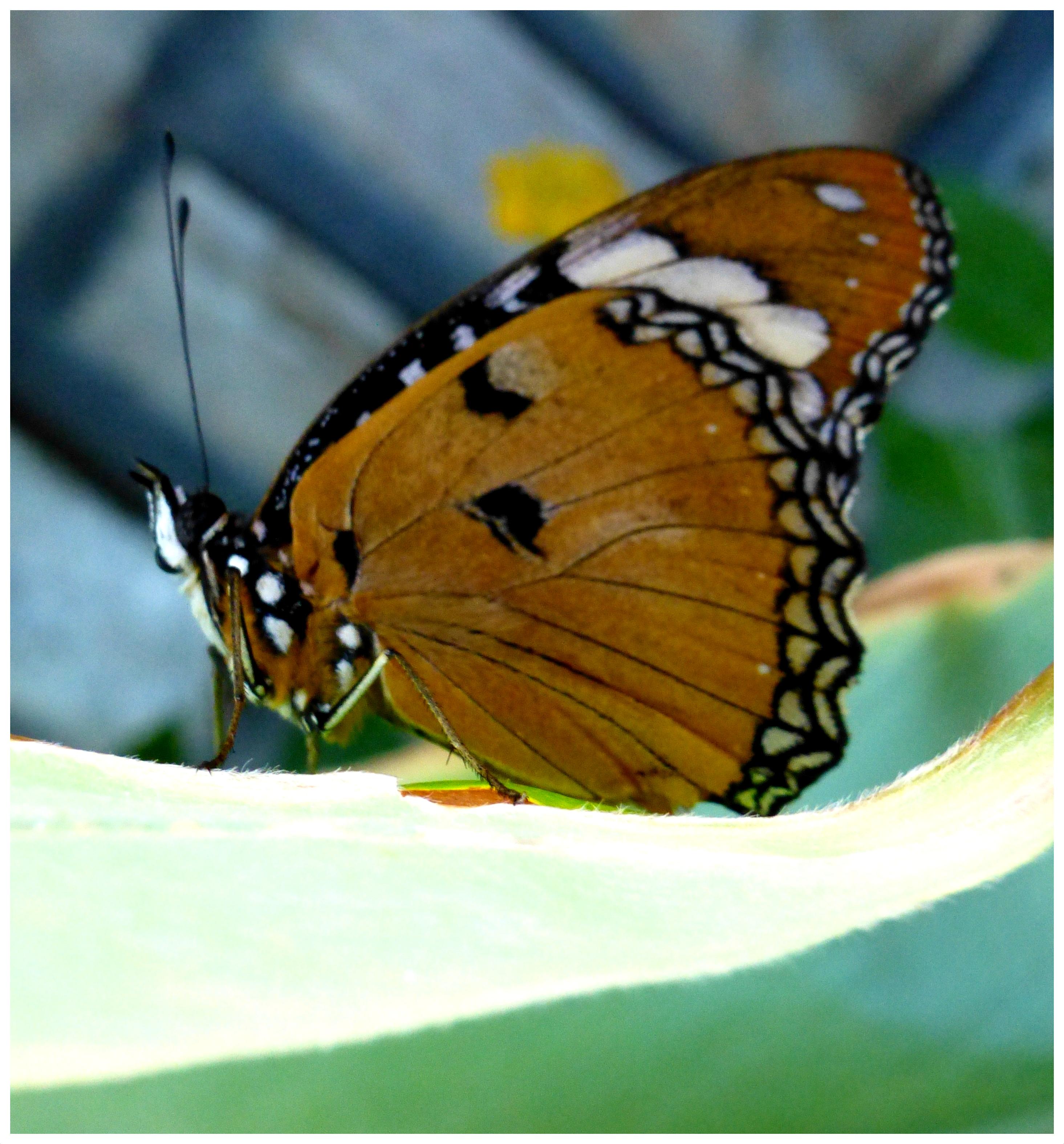 butterflies997