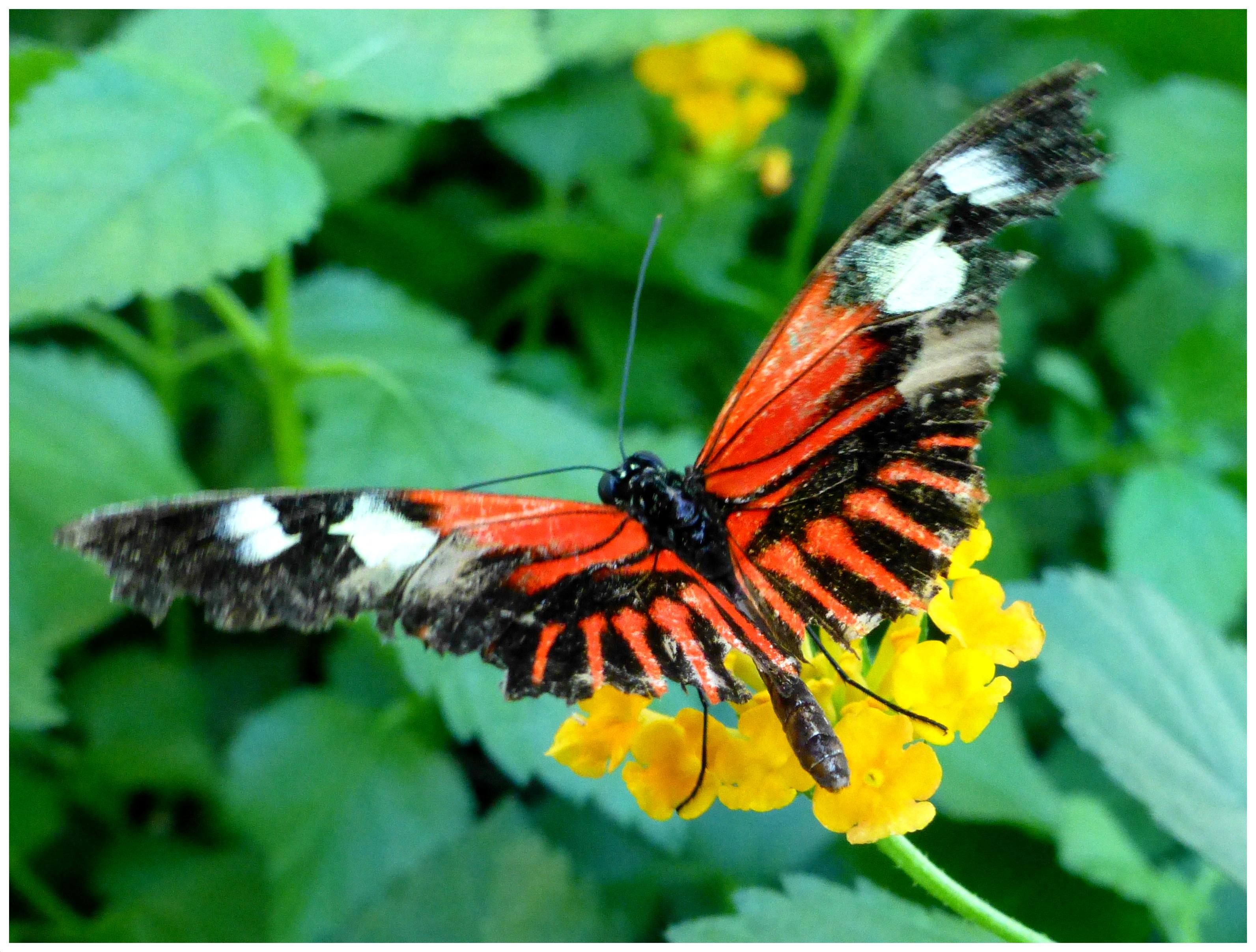 butterflies998