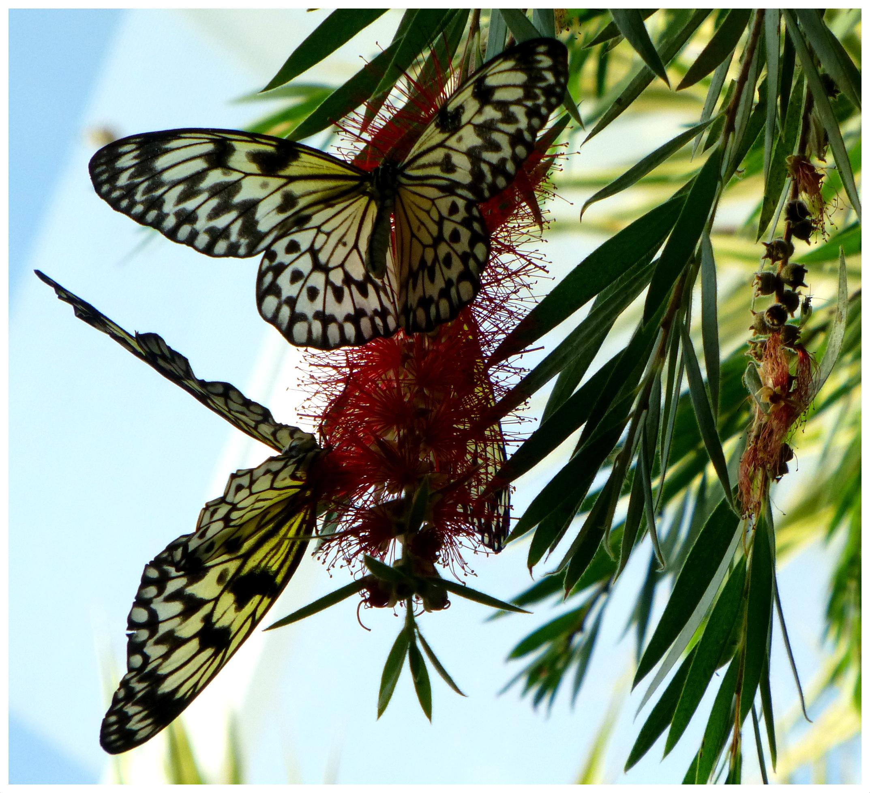 butterflies9992