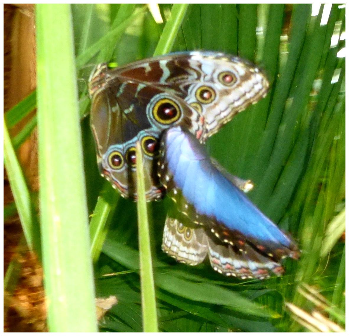 butterflies9993