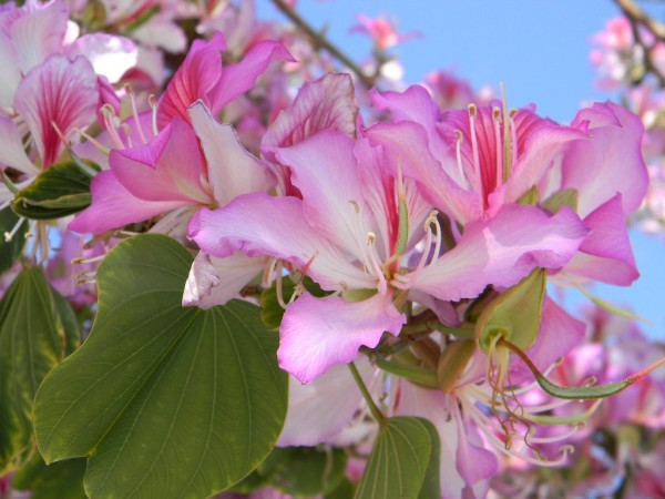 Pink tree new 8