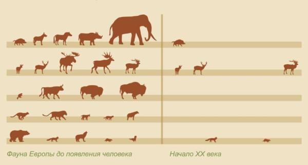 фауна европы
