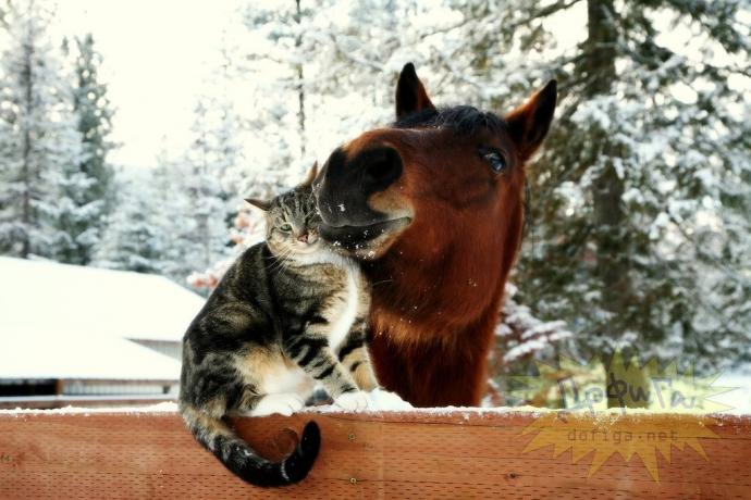 Кот и лошадь