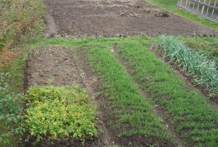 12-09-21=Травка зеленеет