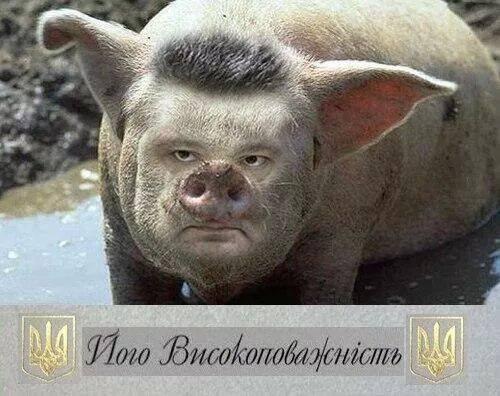 Poroshenko_svin