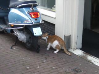 bike&cat