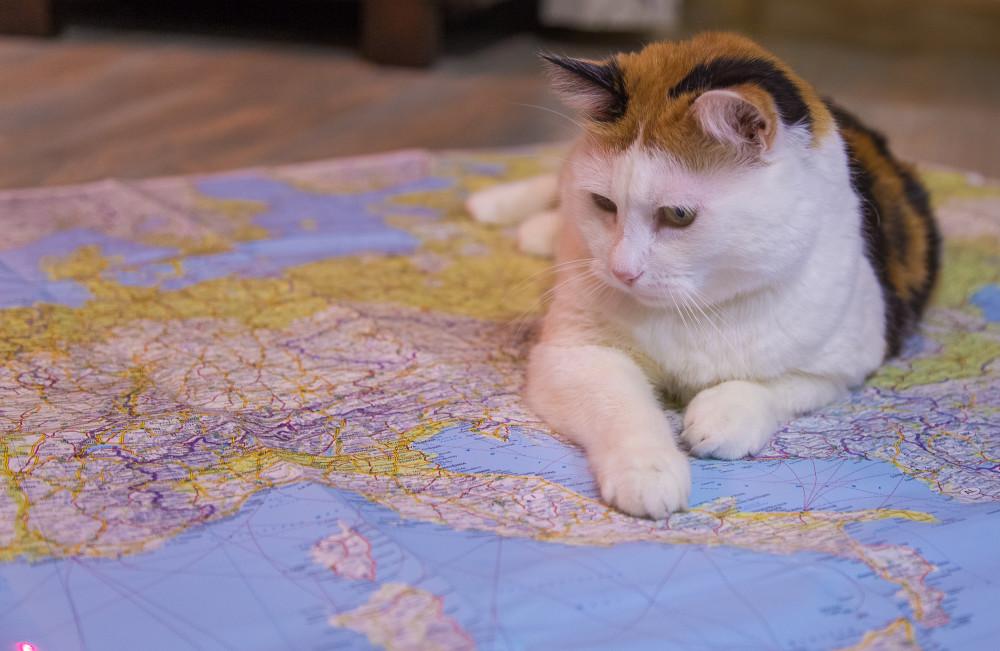 Котики правят миром