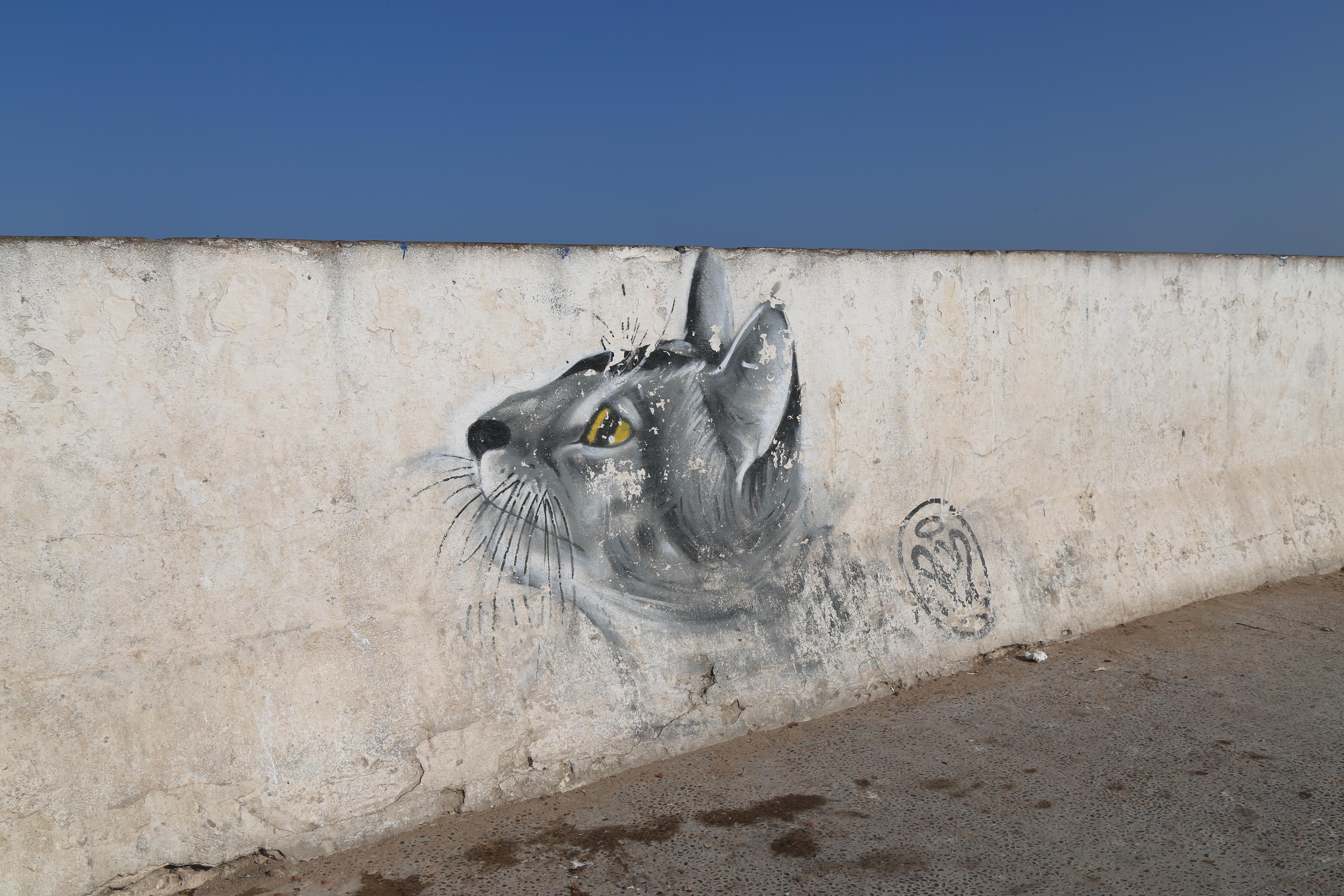 Коты пиратского города