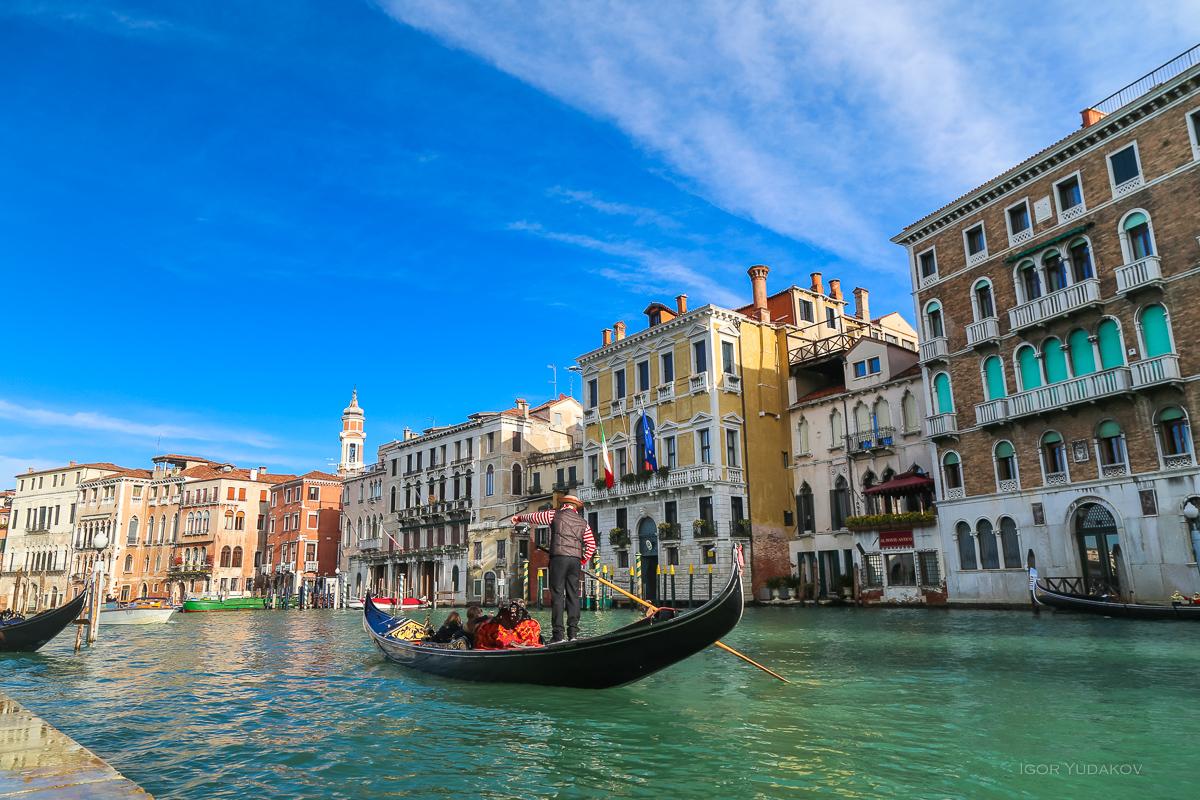 Одна моя знакомая чайка Венеции, Живет, видела, знаменитая, самая, чайка, кажется, звездой, просто, инстаграм, безобразие, Просто, фотографирует, мужчина, почему, прямо, направленные, телефоны, смущают, туристов