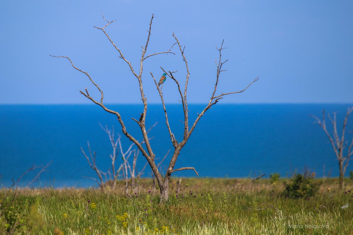 Что ожидать по дороге на Крым? Прекрасна, очень, далеко, доброжелательный, дороге, Кстати, Крыме, Друзья, только, вернулись, работает, пробки, денег, берут, Досмотр, быстрый, Ночью, готовьтесь, вообще, интересных
