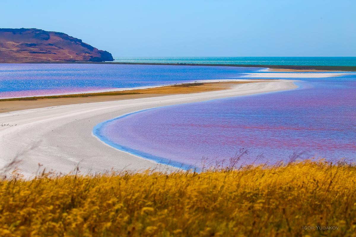 Розовые скворцы и розовые мечты озеро, розовым, просто, пляже, Заповедник, Кстати, водоросли, сейчас, чтобы, можно, первый, розовых, Игоря, места, мелкую, озера, началось, Бесконечность, согнал, сухих