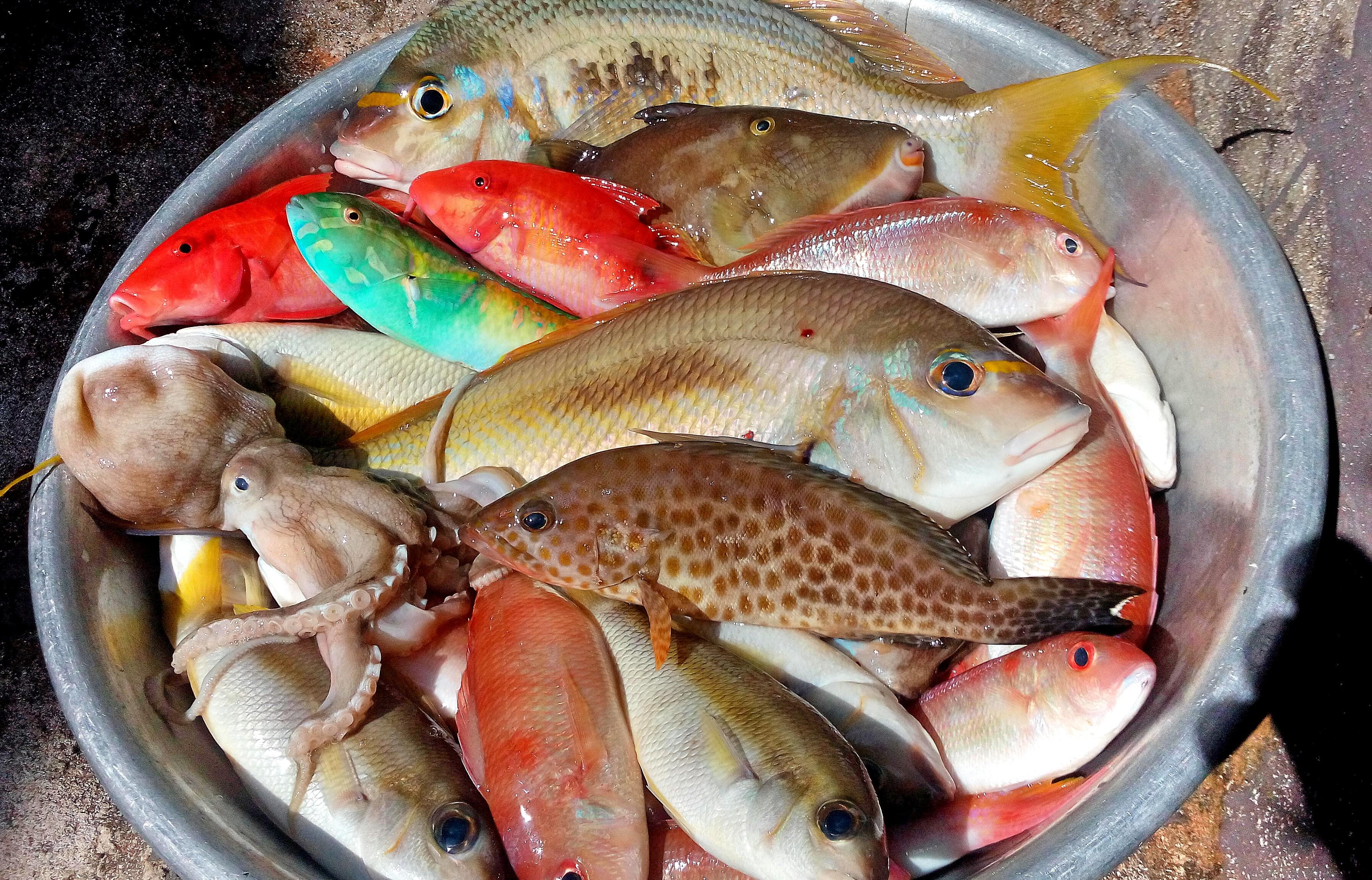 съедобные морские рыбы картинки стапелия фото