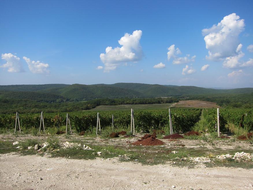 Gostagai Toscana1