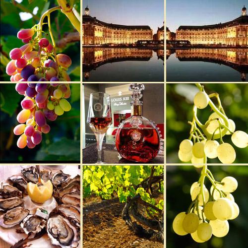 grape_bod_500