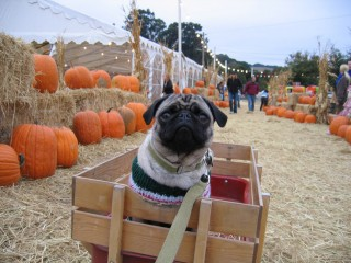 Riding through the pumpkin patch