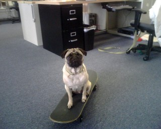 Shelby's no skateboarder