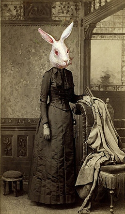 historical-rabbit