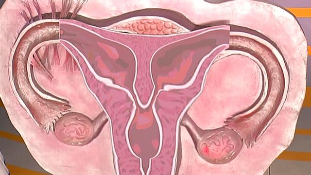 y форма-фото.женского органа