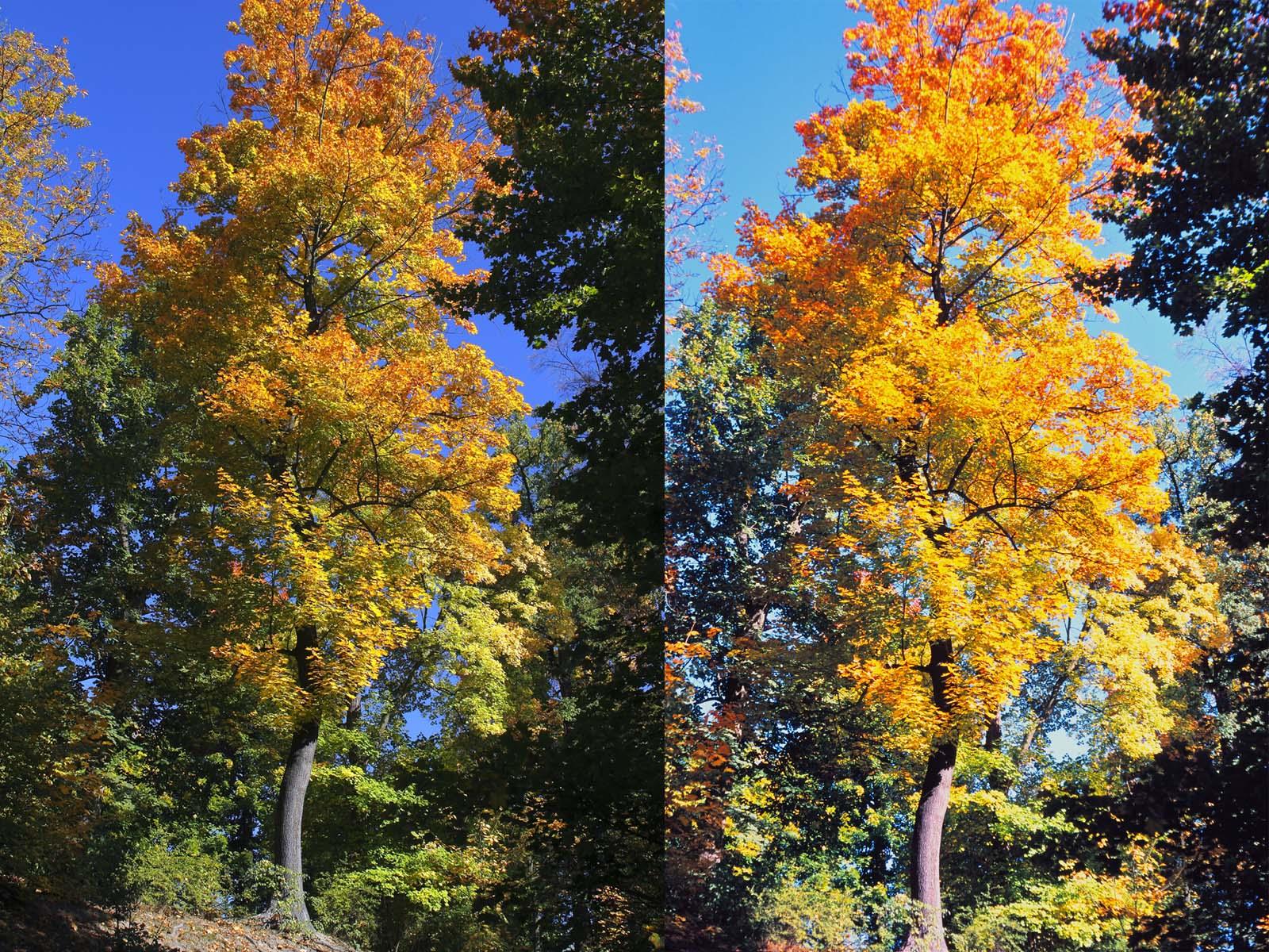compare_tree_1600