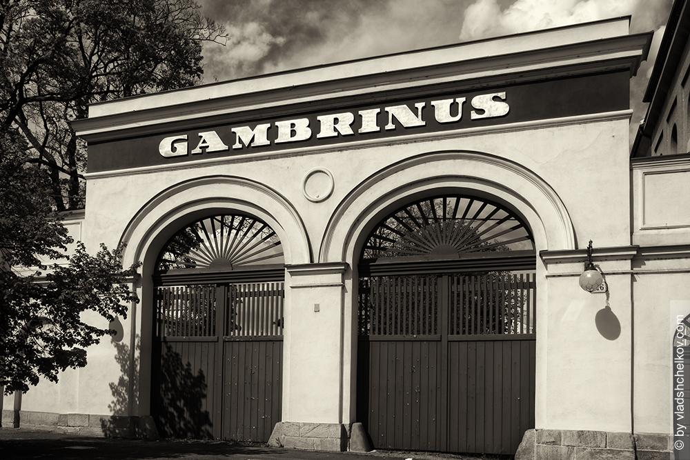 gambrinus_postcard
