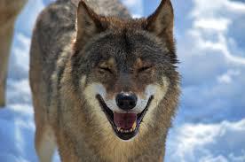 wolf lough.jpg