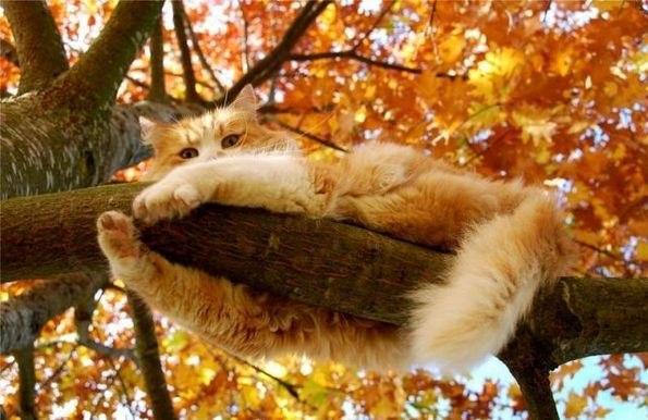 коты и осень фото