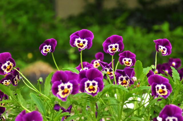 фото дня цветы: