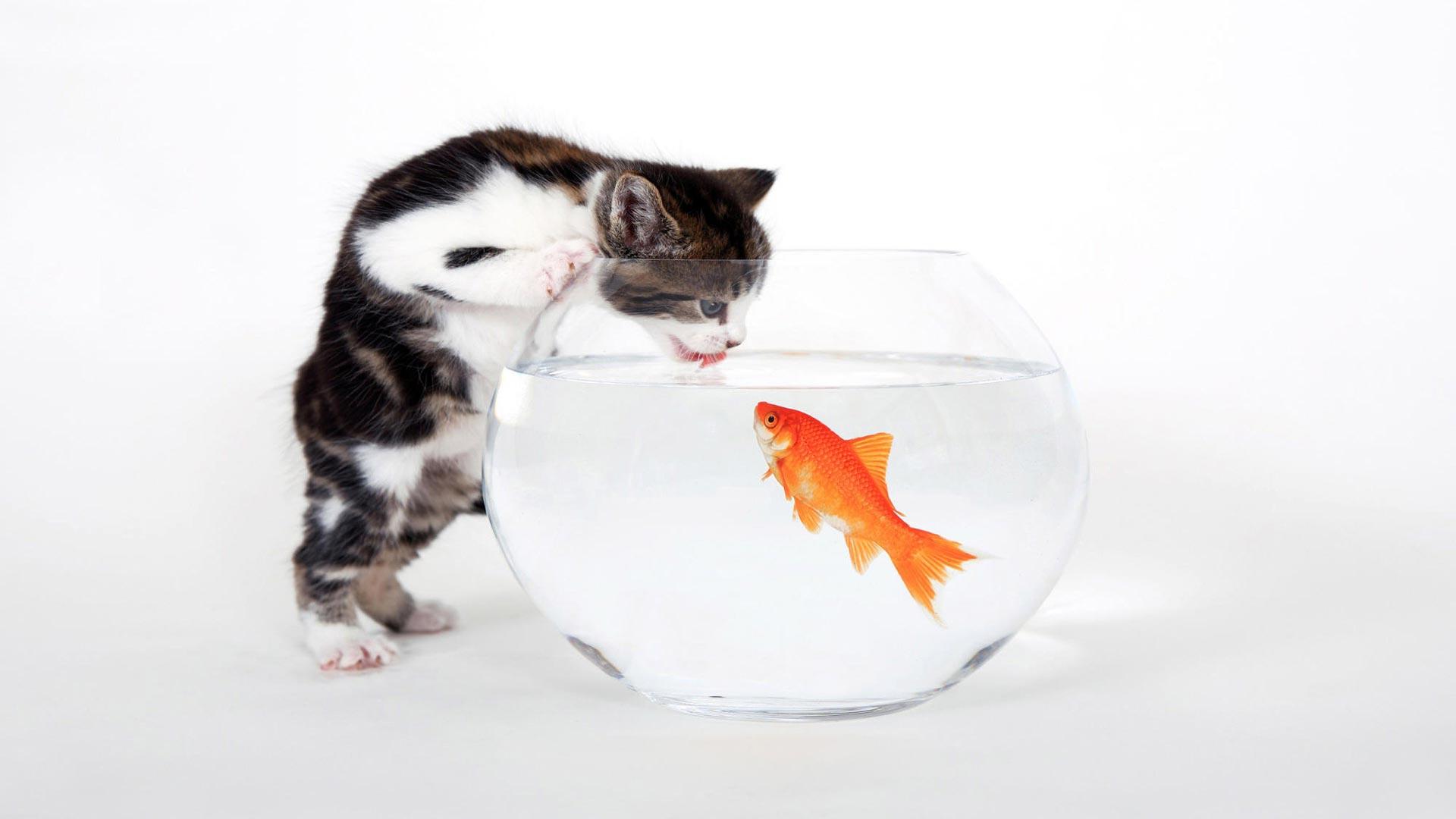 серый кот с рыбкой  № 692209 бесплатно