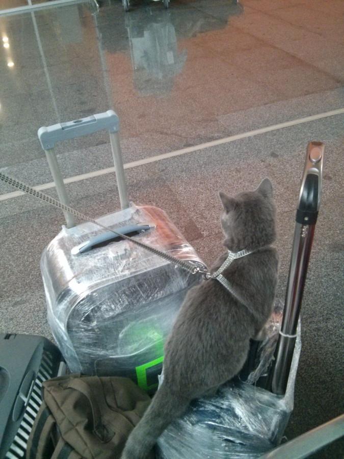 Перевозка животных. Перевозка кота в Китай