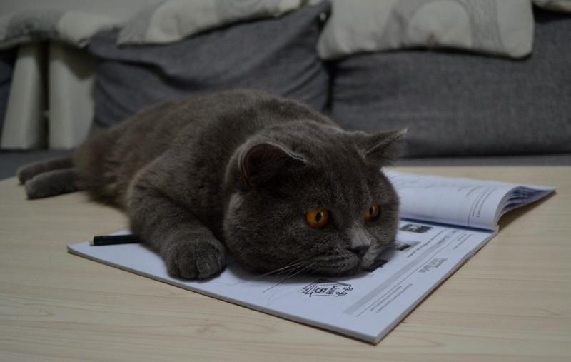 Будни украинского кота в Китае