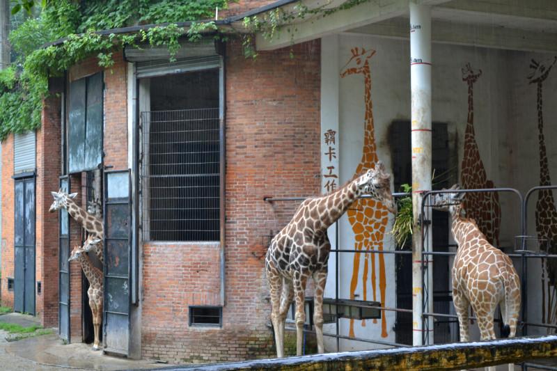 Зоопарк Гуанчжоу
