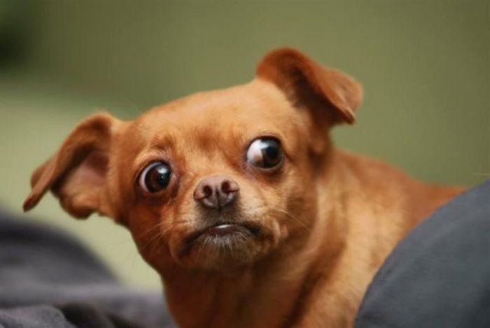 Любви взрослой, гифка собачки с глазми на выкате и высунутым языком