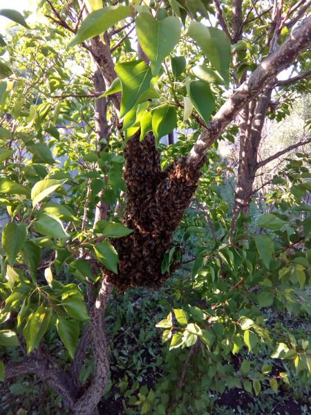 пчелиная тусня